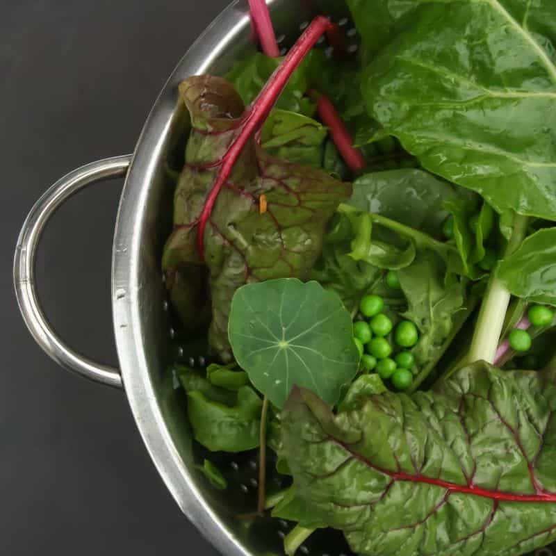 salad greens in a stainless steel colander